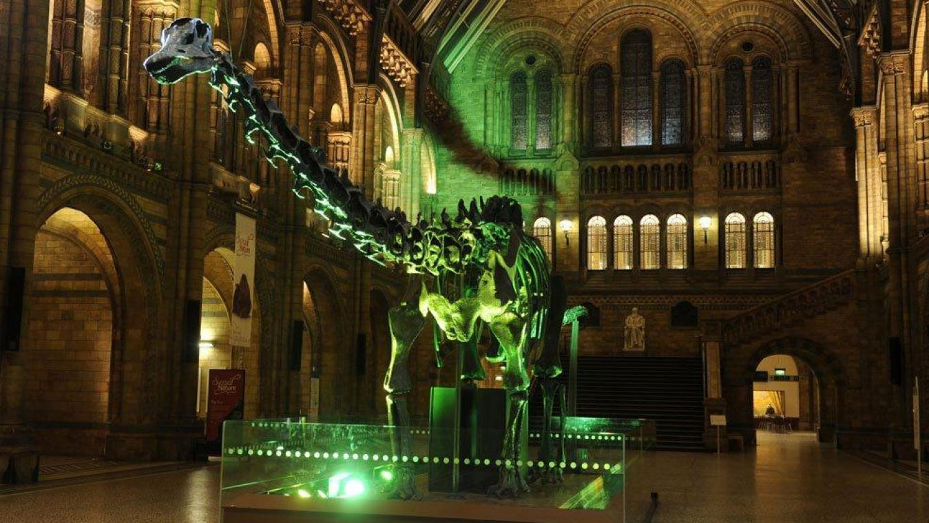 Natural History Museum, Londres.